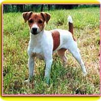 Adopt A Pet :: Peachy - Secaucus, NJ