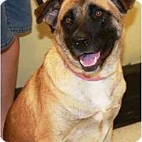 Adopt A Pet :: Jackie - Gilbert, AZ