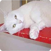 Adopt A Pet :: Peasblossom - El Cajon, CA