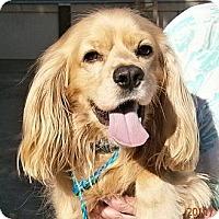 Adopt A Pet :: Bodie - San Diego, CA