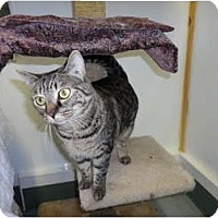 Adopt A Pet :: Peanut - Kingston, WA