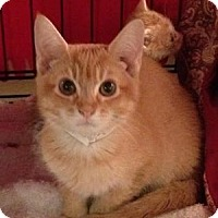Adopt A Pet :: Clifford - East Hanover, NJ