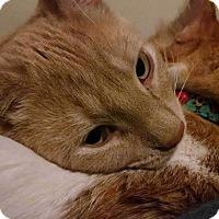 Adopt A Pet :: Dempsey - Chicago, IL