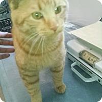 Adopt A Pet :: Ernie - Saginaw, MI
