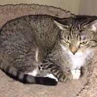 Adopt A Pet :: Missy - Monroe, NY
