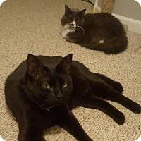 Adopt A Pet :: Zelda And Link - Harrisonburg, VA