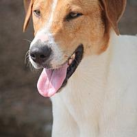 Adopt A Pet :: K. J. **IN NEW HAMPSHIRE** - Cranston, RI