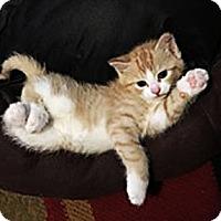 Adopt A Pet :: Basil - N. Billerica, MA