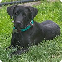 Adopt A Pet :: Xena - Elmwood Park, NJ