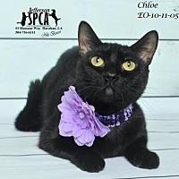 Adopt A Pet :: Chloe @ Pets R Our World - Jefferson, LA