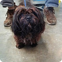 Adopt A Pet :: Willie - AUR, IL