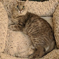 Adopt A Pet :: Mookie - Irwin, PA