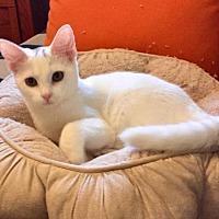 Adopt A Pet :: Ellie - Dallas, TX