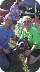 American Staffordshire Terrier Mix Dog for adoption in Crown Point, Indiana - Mrs. Wiggles