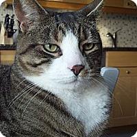 Adopt A Pet :: Wellington - Fairfield, CT
