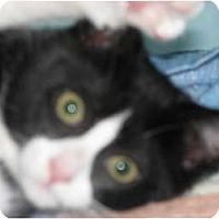 Adopt A Pet :: Ashley & Jelly Bean - Richfield, OH