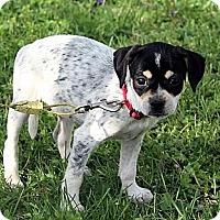 Adopt A Pet :: Greenlee - Staunton, VA