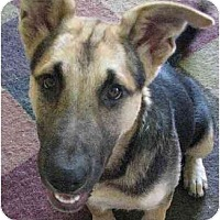 Adopt A Pet :: Tanner - BC Wide, BC
