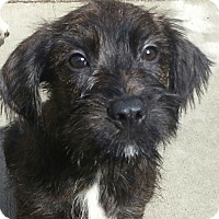 Adopt A Pet :: Jocko*ADOPTED!* - Chicago, IL