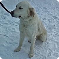 Adopt A Pet :: Willow - Rigaud, QC