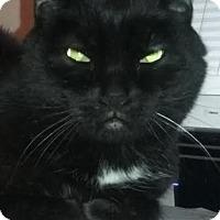 Adopt A Pet :: Kiki - Delmont, PA