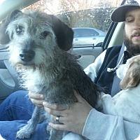 Adopt A Pet :: Lucy - Loveland, CO
