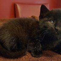 Adopt A Pet :: Henry - Toms River, NJ