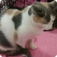 Adopt A Pet :: Lil Momma - Columbus, OH