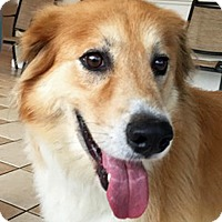 Adopt A Pet :: Bellah - BIRMINGHAM, AL