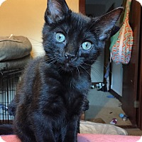 Adopt A Pet :: Pippa - Manhattan, KS