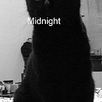 Adopt A Pet :: Midnight - Columbus, OH