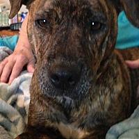 Adopt A Pet :: Sarah - Staunton, VA
