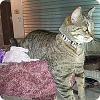 Adopt A Pet :: Vera - Grand Rapids, MI