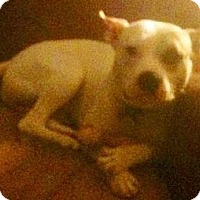 Adopt A Pet :: Titan - Strongsville, OH