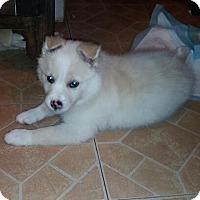 Adopt A Pet :: Dakota, Zoey, Missy - Denver, IN