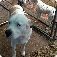 Adopt A Pet :: DUNKIN - Sudbury, MA