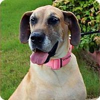 Adopt A Pet :: Triscuit - Marietta, GA