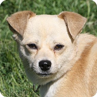 Terrier (Unknown Type, Small) Mix Dog for adoption in Edmonton, Alberta - Gavin