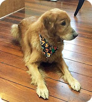 Golden Retriever Mix Dog for adoption in BIRMINGHAM, Alabama - Jackson