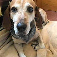 Adopt A Pet :: Madyson - Saranac Lake, NY