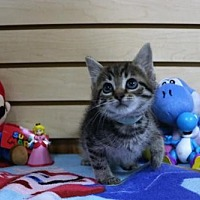 Adopt A Pet :: Rosalina - Mocksville, NC