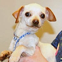 Adopt A Pet :: 354826 - Wildomar, CA