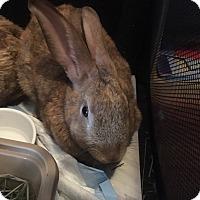 Adopt A Pet :: Nancy - Las Vegas, NV