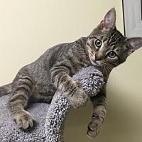 Adopt A Pet :: Cal - Dahlgren, VA