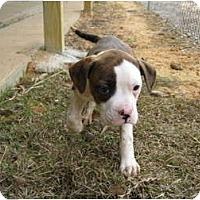 Adopt A Pet :: Lexi - Meridian, MS