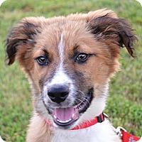 Adopt A Pet :: *Minnow - PENDING - Westport, CT