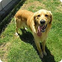 Adopt A Pet :: Scooter - Santa Ana, CA