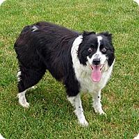 Adopt A Pet :: Cash - Denver, CO