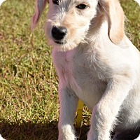 Adopt A Pet :: Aiden - New Canaan, CT