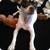 Adopt A Pet :: Isla - Meridian, ID